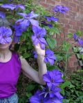 Violet Amoung The Flowers
